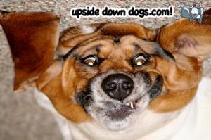 upsidedowndogs.com