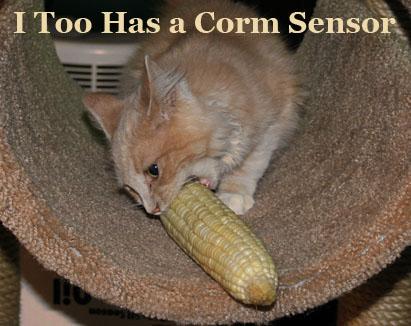 corm-sensor