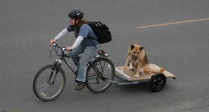 bicycle-dog-zogdo