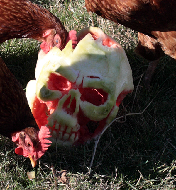 Chicken Zombies