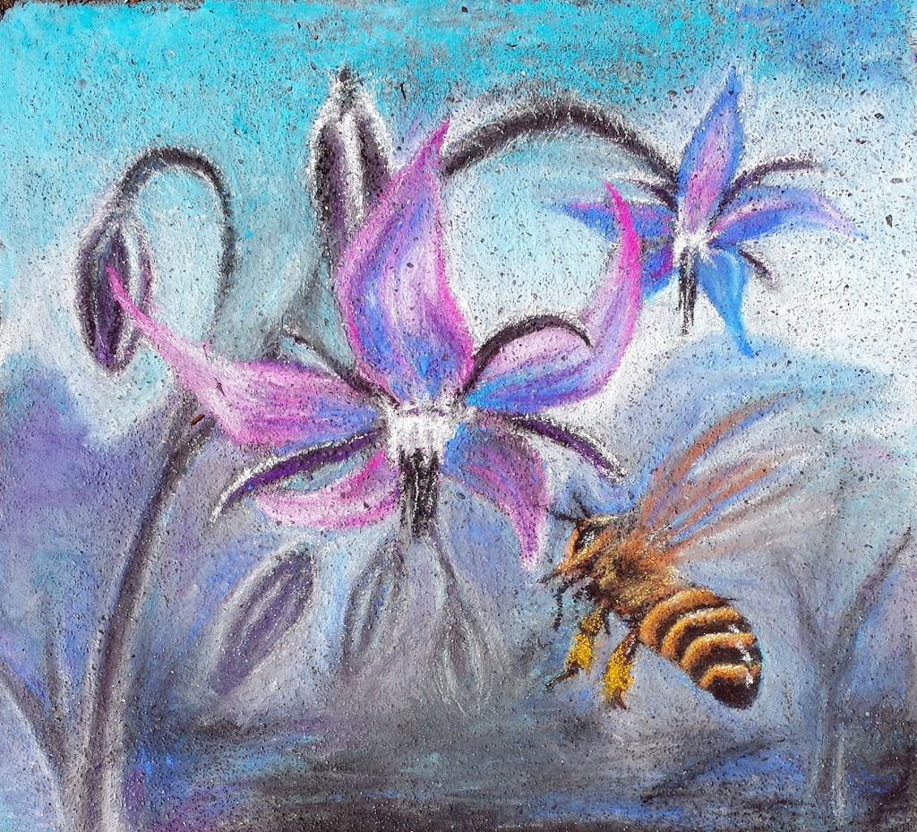borage and honey  bee