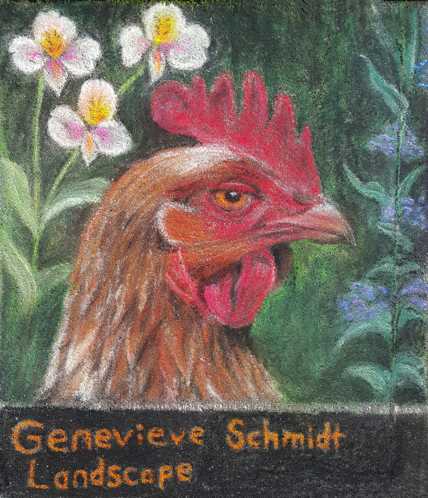 Chicken portrait pastels on the plaza